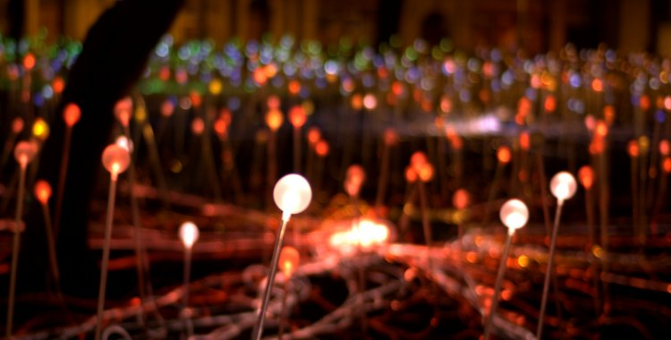 Field of Light Edinburgh by Laura Anderson