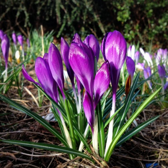 Spring Flowers by Laura Anderson