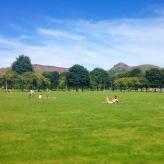 2014-07-meadows