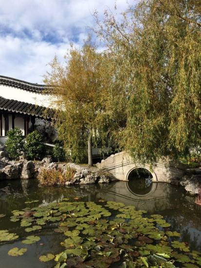 dunedin chinese gardens pond