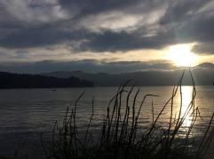 otago reeds sunset